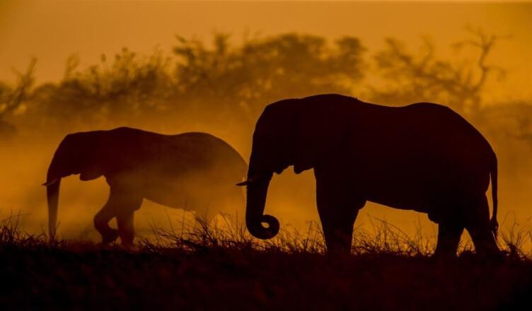 Tapeta Słonie